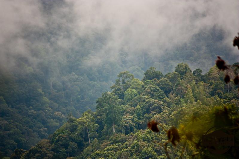 Kerinci-Seblat National Park