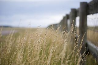 Fences | by Peej's Photos