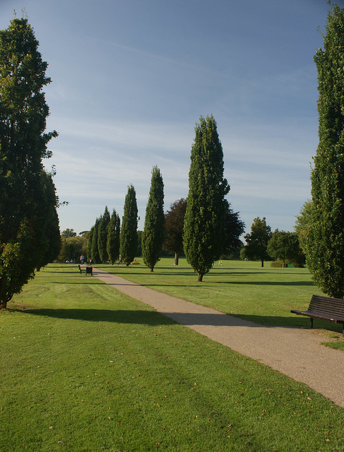 Horsham Park - Avenue of cypress trees 2