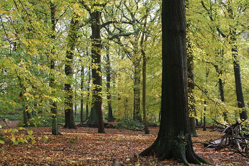 Sherrardspark Wood   by Helen Flynn