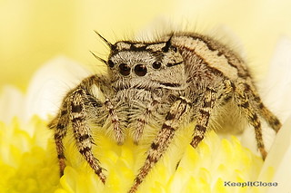 Female  Jumper. | by graftedno1