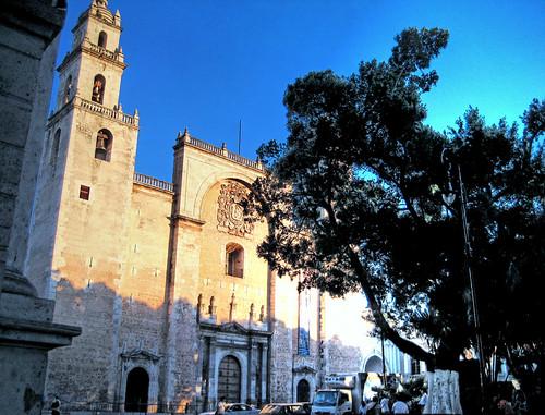 La Catedral y el Árbol