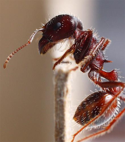 Propel-ant