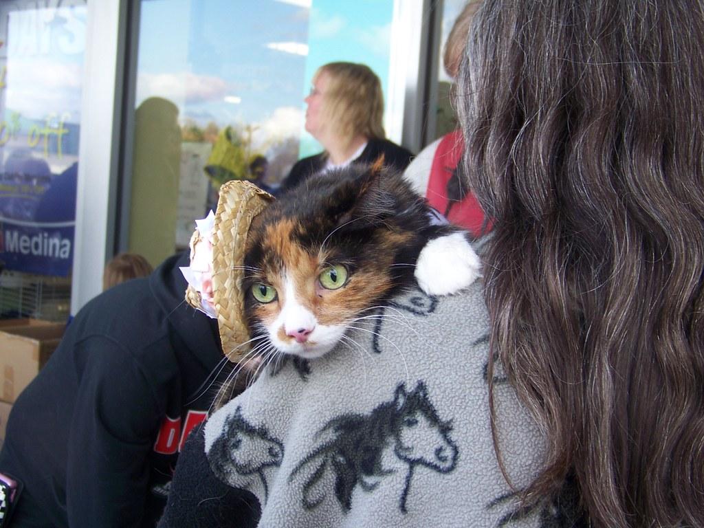 Cowgirl Cat   yvonne n   Flickr