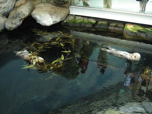 Oceanarium   by sheilaellen