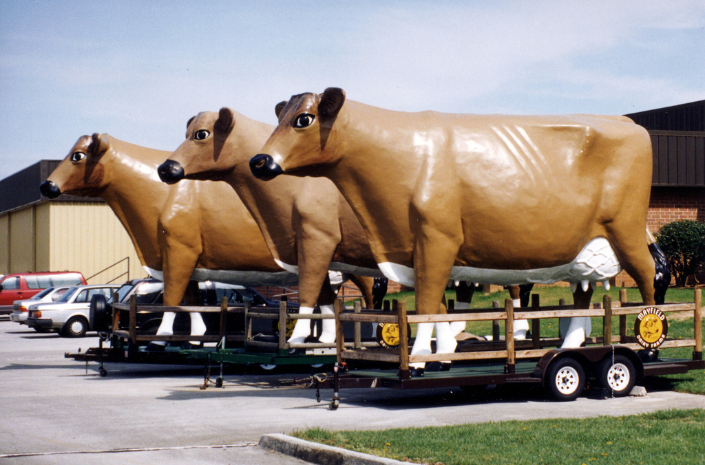 Mayfield Dairy Cows