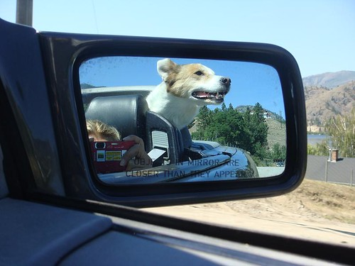 Chinook likes riding in the 500SL | by RosalindGardner