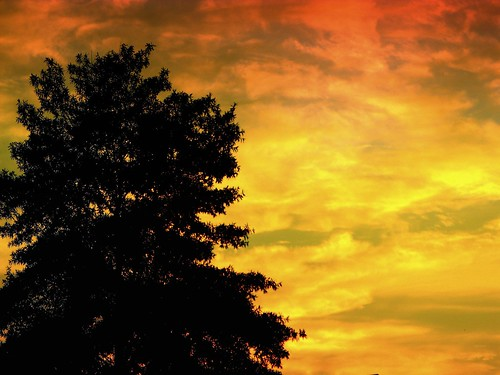 sunset red orange sun tree against clouds fire dramatic setting silhoutte greeneyephoto