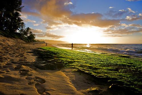 north shore, oahu | by brian.crissie