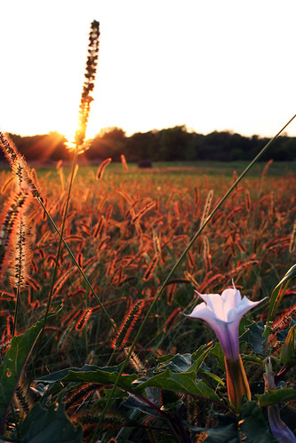 sunset flower beautiful field grass sunrise catchycolorspool travelingwithoutmoving