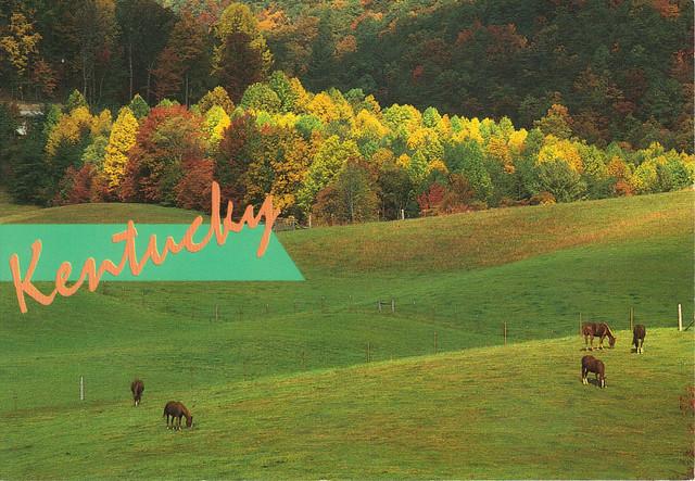 Kentucky Horses Postcard