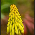 yellow flower bokeh