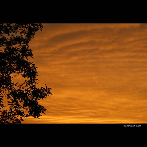 morning sky orange tree silhouette sunrise square glow goldenhour thegalaxy