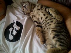 Cat Naps | by Ian Wilson