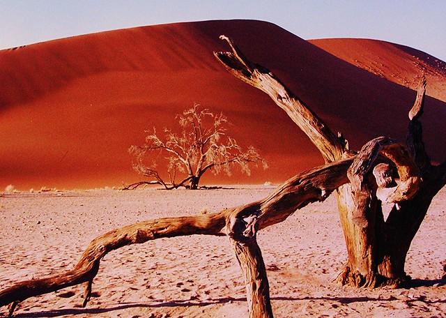Baumskelett in der Namib  - 33 , Dead tree in the namib, 3058