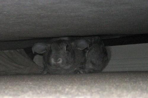 giant dust bunnies? | by mbkepp