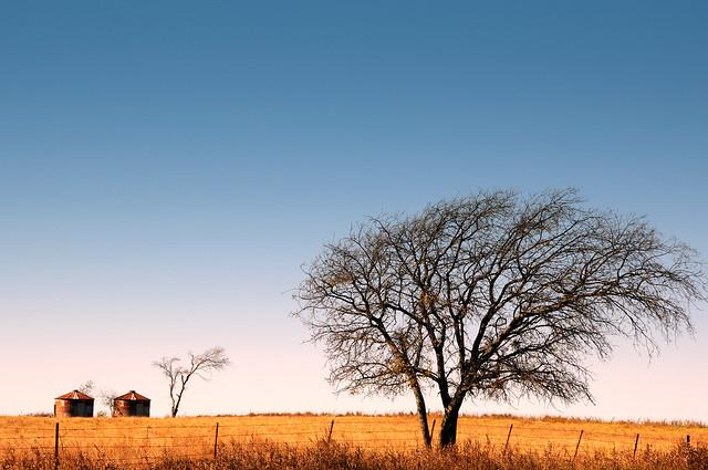 DSC_8600 Slidell Texas Wise County Windswept Lone Tree Horizon Grass Barbed Wire Fence Grain Silo Leafless Field Golden Grain Blue Sky
