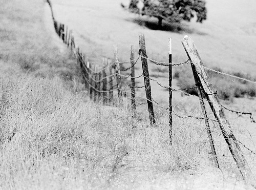 old fence | by kaiyen