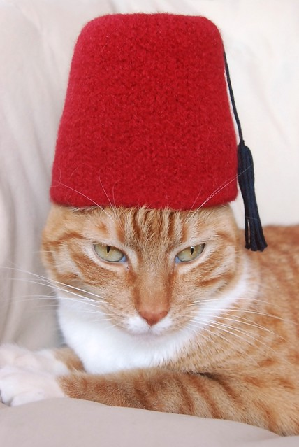 International Cat Hat: Turkey | Every cat needs a fez! This