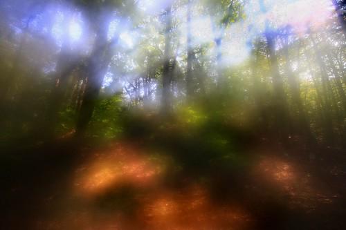abstract massachusetts holyoke impressionist humidity mttomreservation woodedglen