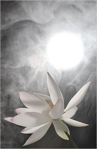 Lotus Flower IMG_0126 by Bahman Farzad