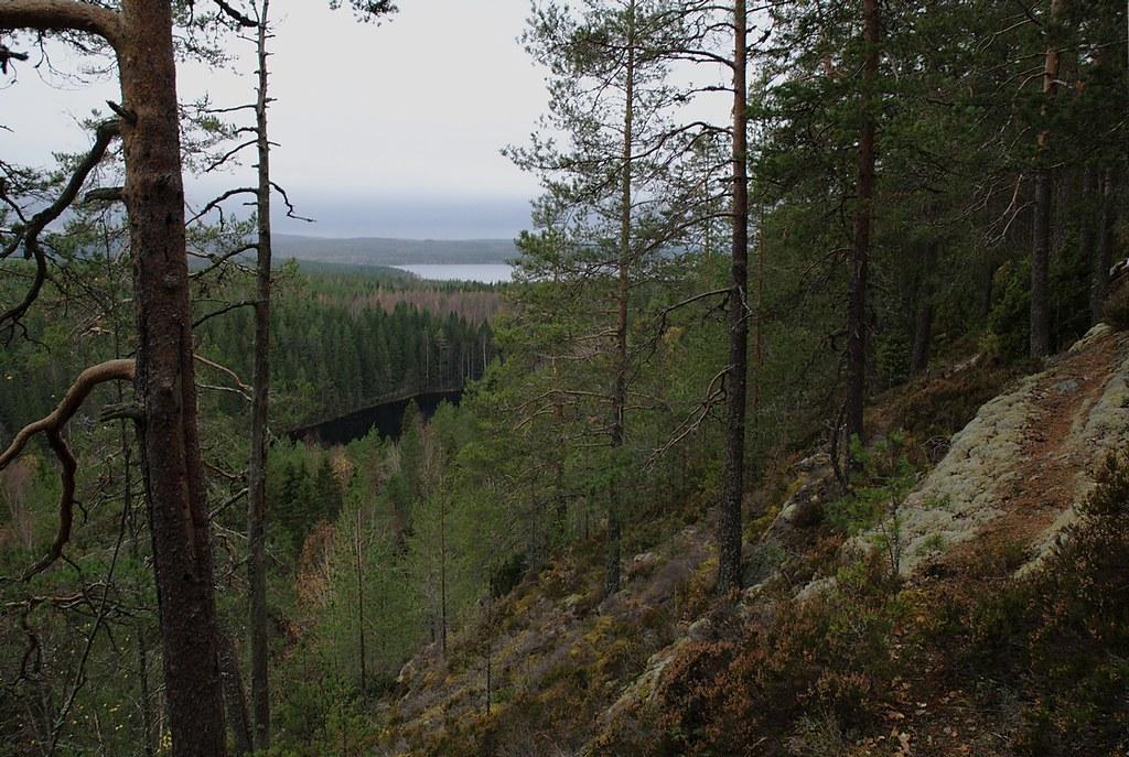 Vuorilampi Kuopio