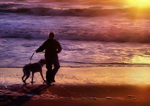 friends sunset dog beach water oregon marylee shiningstar golddragon abigfave omot impressedbeauty maryleemartin citrit eperke platinumheartaward southoregoncoast goldstaraward photographersgonewild maryleeusa maryleepope