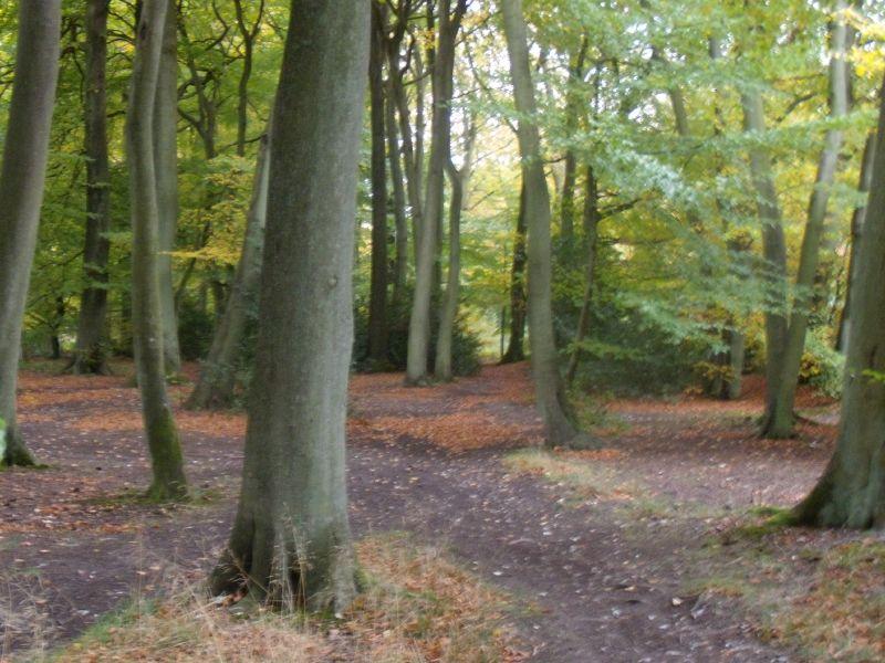 trees Goring circular