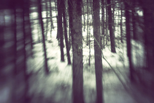 through the woods | by Elin Ivemo