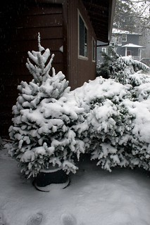 Oh Christmas Tree, Oh Christmas Tree, we need to brush the snow off thee | by Major Clanger