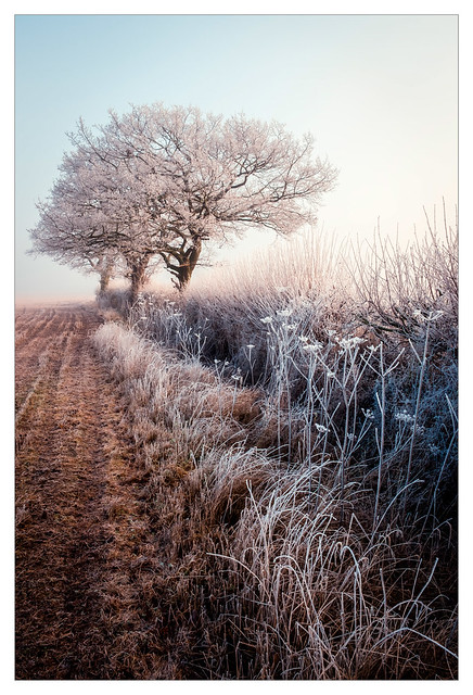 Frosty Hedgerows