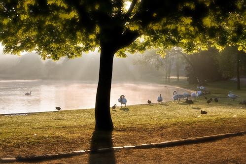 brussels mist lake sunrise dawn swan belgium formal getty kevday cmbrussels