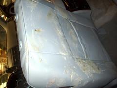 Limpieza y desinfección de robo de vehículos