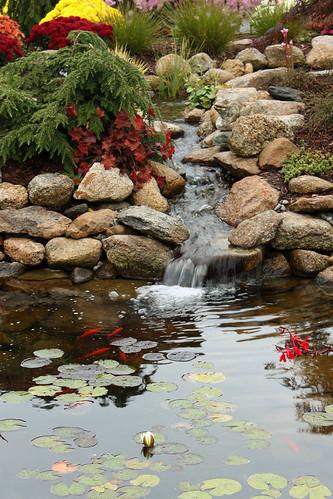 flowers plants fish nature water canon garden rebel waterfall pond rocks stream goldfish lilypad xsi pondlily