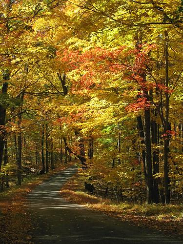 autumn fall leaves nj ridgeroad highpointstatepark sussexcounty
