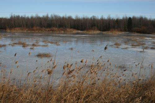 Frozen pond | by SeabrookeLeckie.com