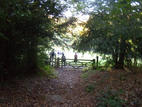 Through a gate Cowden to Eridge