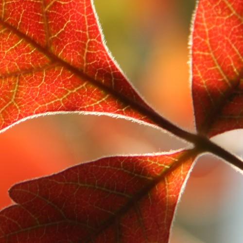 autumn leaves iii soe potofgold naturesgallery bokehlicious colorphotoaward aplusphoto theperfectphotographer thechallengefactory