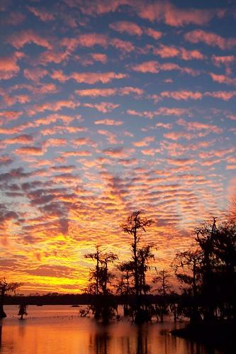 pink blue sunset sky orange cloud tree silhouette yellow landscape evening purple scenic swamp 2008 lakemartin 6780 z712is