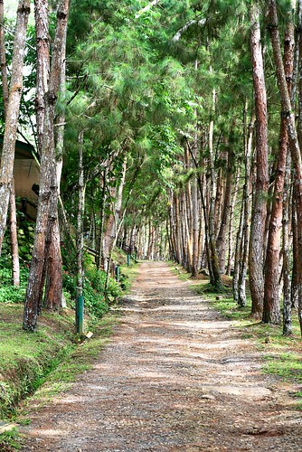 road park city trees mountain green nature fun philippines resort dirt eden pk pathway davao 50mmf18 pianeta davaocity davaodelsur proudlypinoy pinoykodakero teampilipinas natureselegantshots spiritofphotography discoveryphotos larawangpinoy philippinephotographicsociety joliz litratistakami