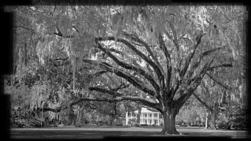 statepark tree edenstatepark