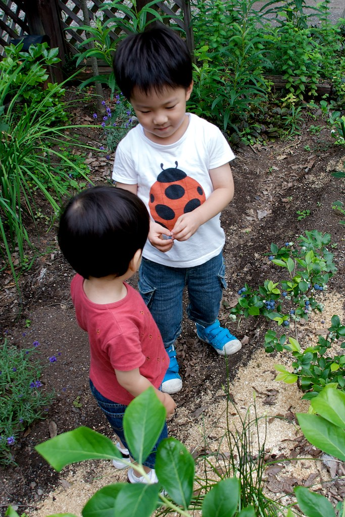 ブルーベリーを分け合う二人 | Masahiko Satoh | Flickr