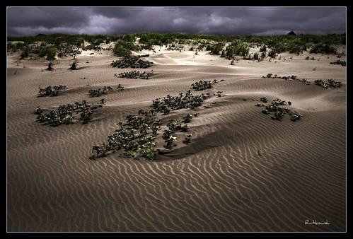 sun beach fog landscape washington sand bravo dunes dune longbeach sanddune klipsan klipsanbeach
