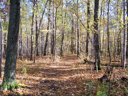 Trail | by jmd41280