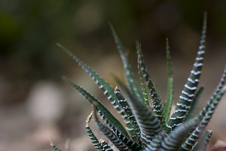 an aloe in laurel canyon | by Deep Owl
