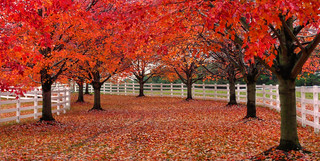Red trees, LWPF, & a path | by joiseyshowaa