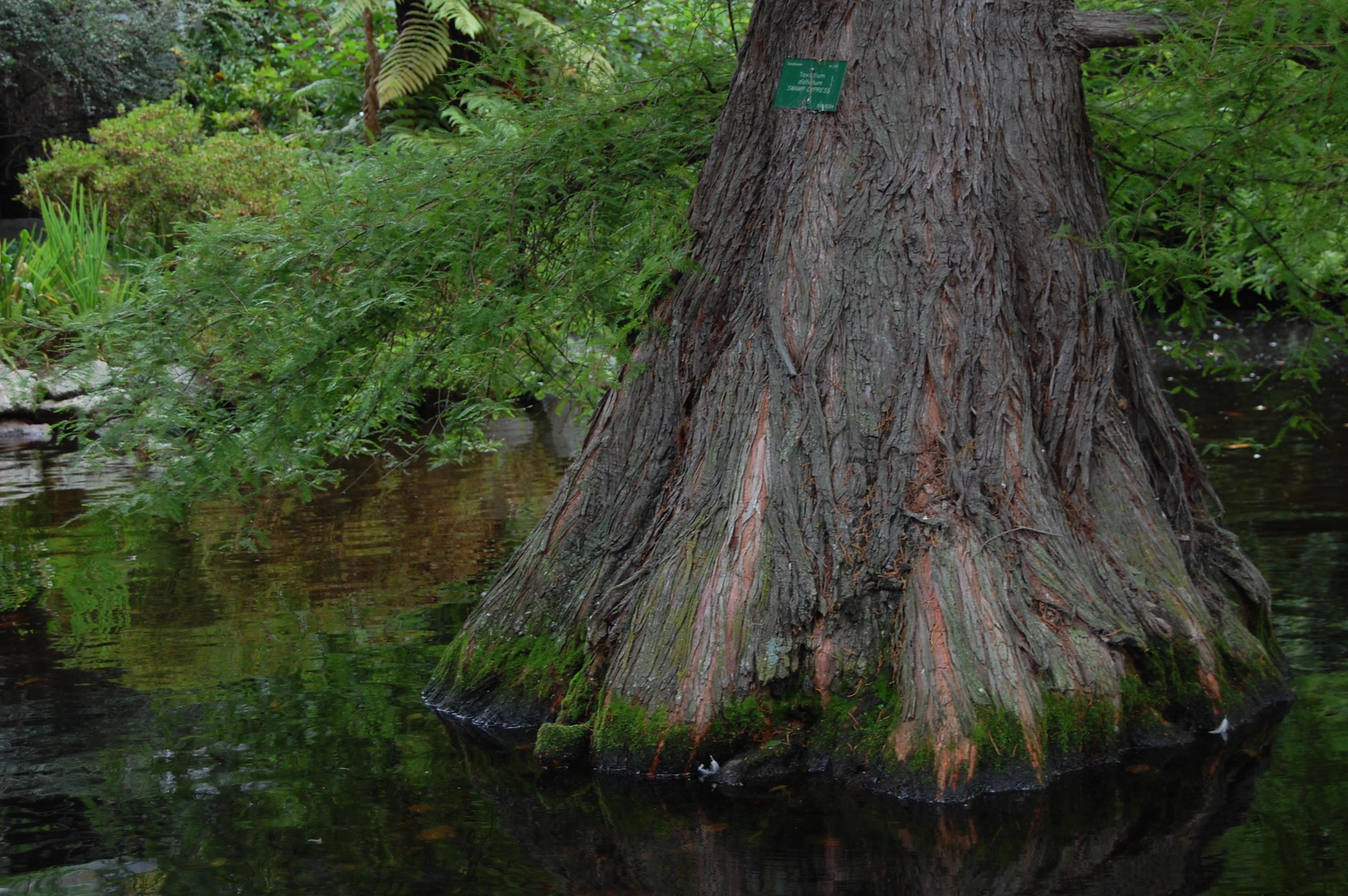 Strom v jezirku