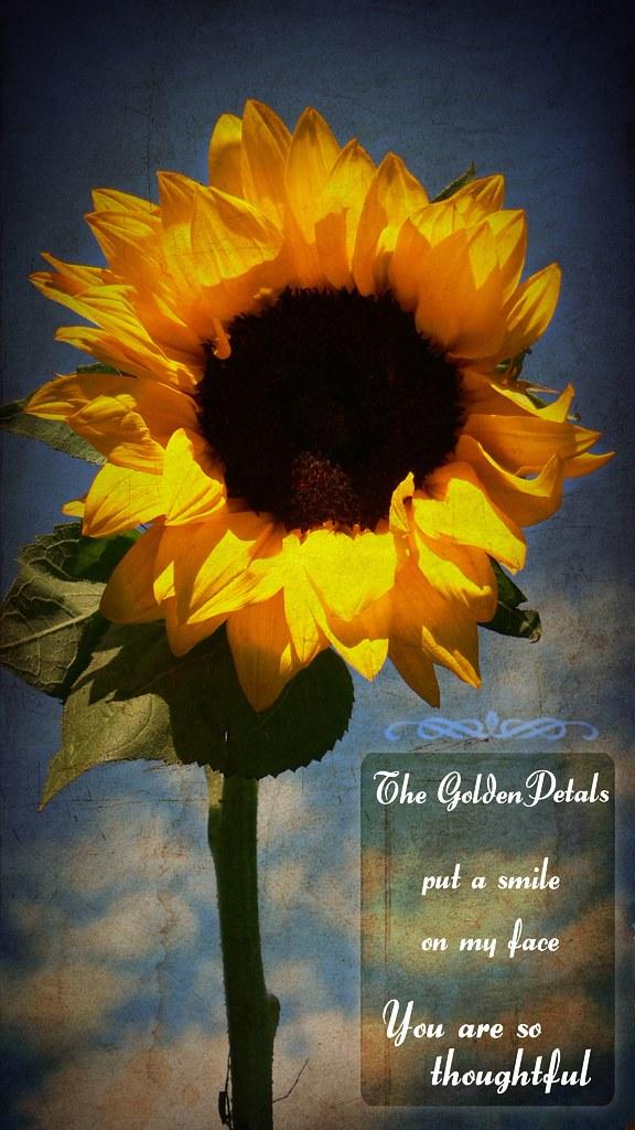 Where the Sun Shines by Wayfaring Wanderer