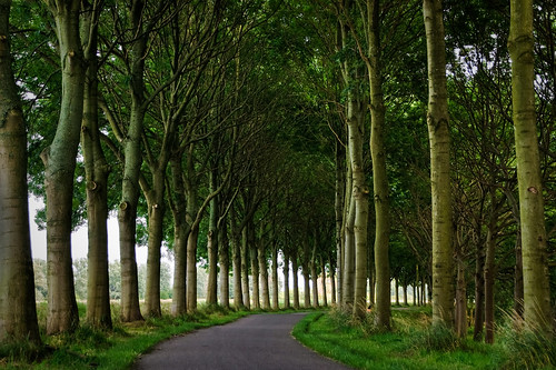 road trees tree green nature water grass amsterdam tarmac thenetherlands shade curved diemen amsterdamrijnkanaal lined kanaaldijk abigfave theperfectphotographer