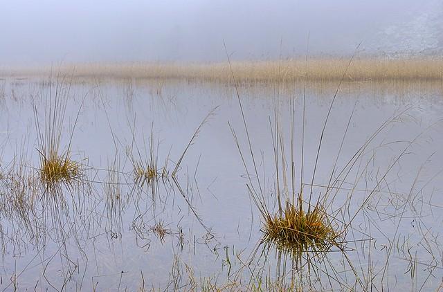 Italy, misty marsh